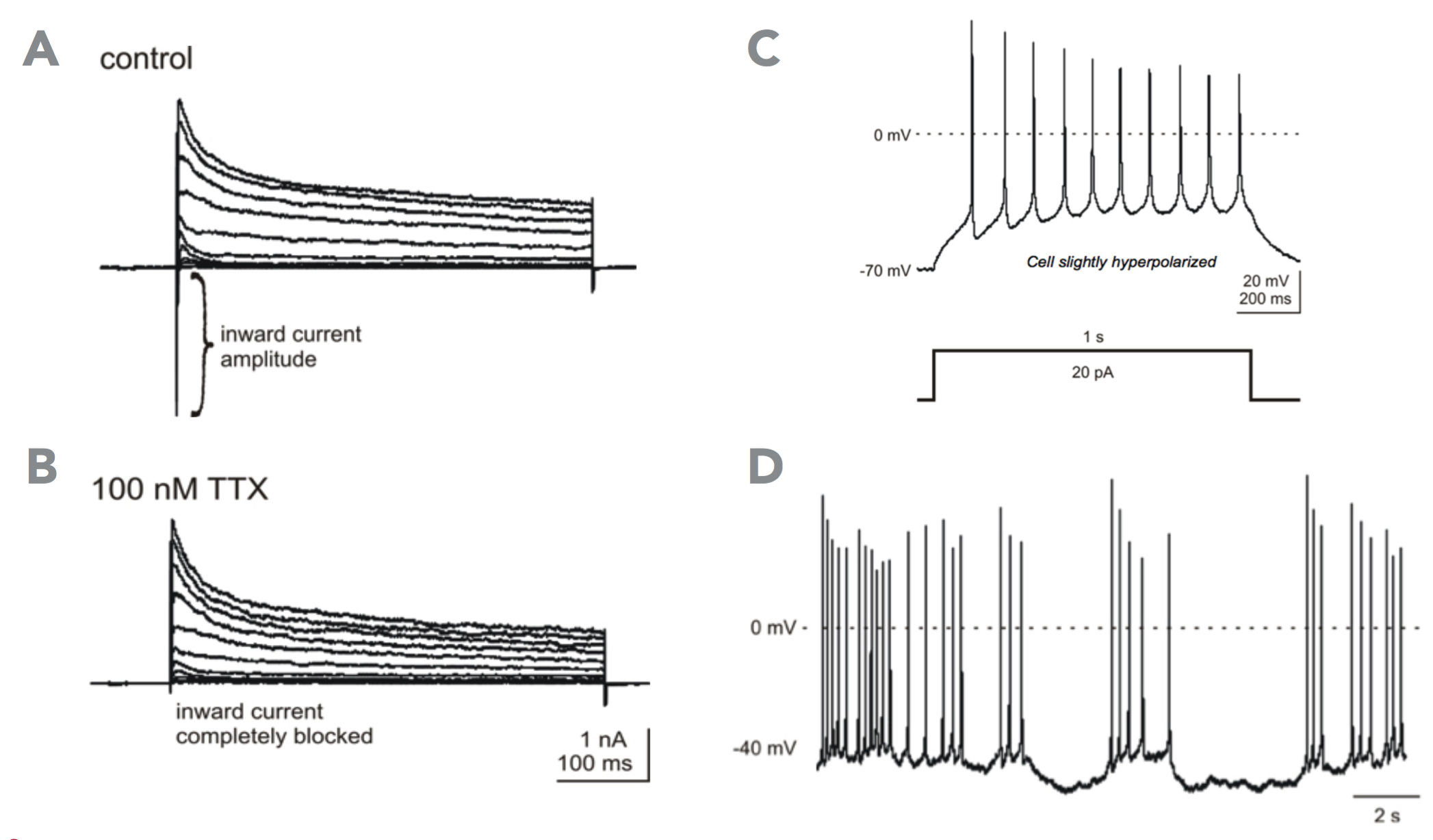 Graph showing action potential of peripheral neurons in patch clamp assay